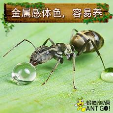 Муравей Ant world