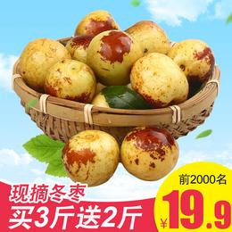 现货沾化冬枣5斤当季新鲜水果枣批发包邮应季10枣子大枣鲜枣大荔