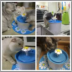 Поилка для кошек и собак Beaconpet